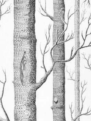 Cole & Son Wallpaper - Woods - Onyx/White 69_12147_CS