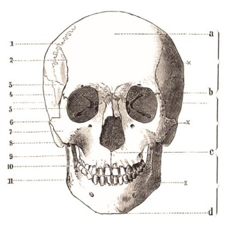 Skull - Creepy Chic Halloween Decor