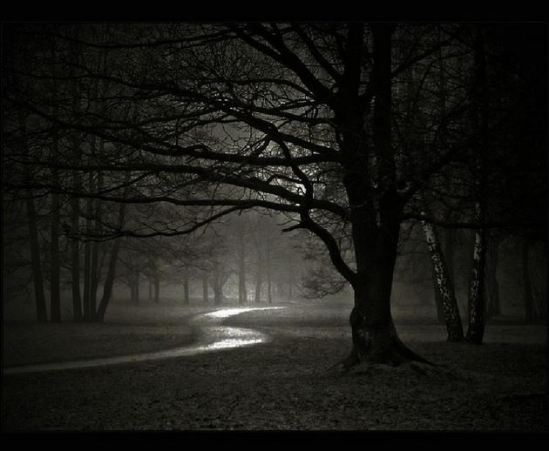 Creepy Trees in Forest