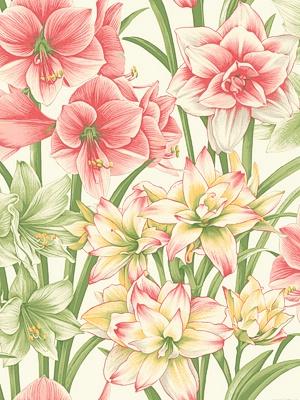 Cole & Son Wallpaper - Exoticks - Green/Pink 98_6023_CS