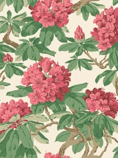 Cole & Son Wallpaper - Bourlie - Carmine 99_4019_CS