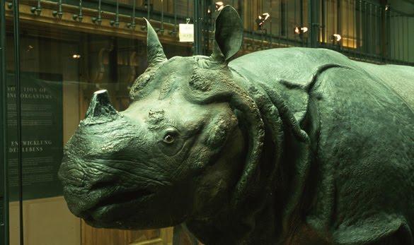 Le-Rhinoceros-de-Louis-XV-a-MNHN-Service-audiovisuel