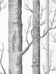 Cole & Son Wallpaper  Woods Onyx/White 69_12147_CS